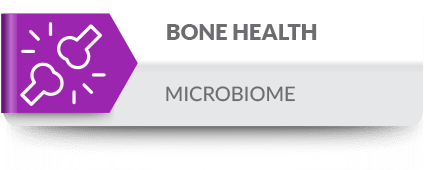 Intestinal microbial flora influence bone health through the immune system and various bone-related cells.
